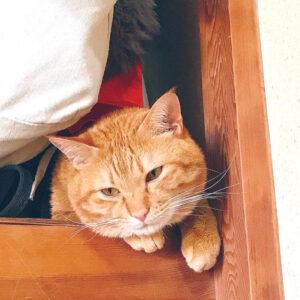 とみた黍さんの愛猫の写真(とみた黍さん提供)