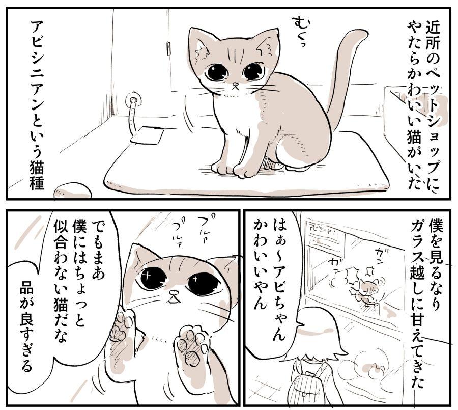 んじゃ た 飼う 猫 なかっ